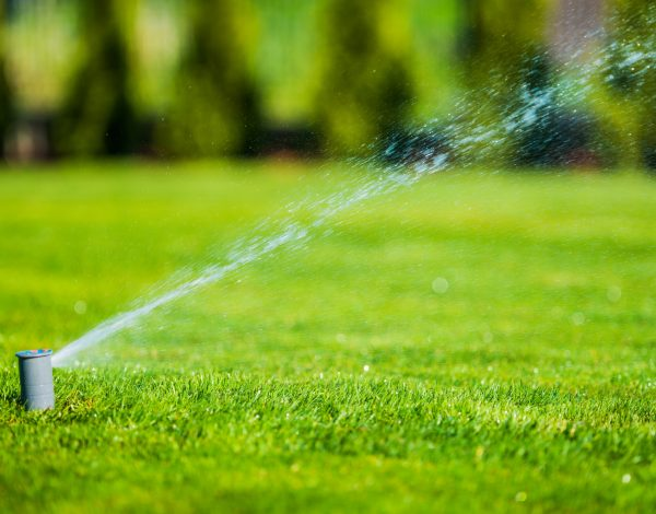 5 Tips To Help You Have A Greener And Healthier Lawn