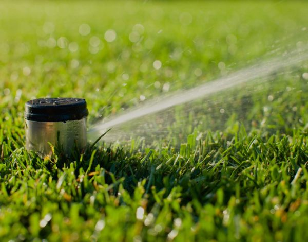 5 Simple Steps To Prepare Your Lawn For Winter